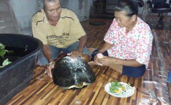 ลุงวางเบ็ดจับปลา แต่ได้เต่าอายุร้อยปีมาแทน